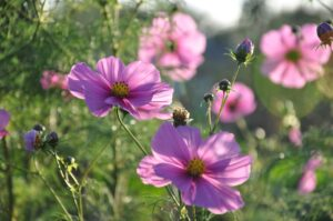 bloemen, kleuren, Zorg In De Tuin, uitzicht