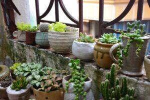 Zorg In De Tuin, balkon, terras, potten, planten