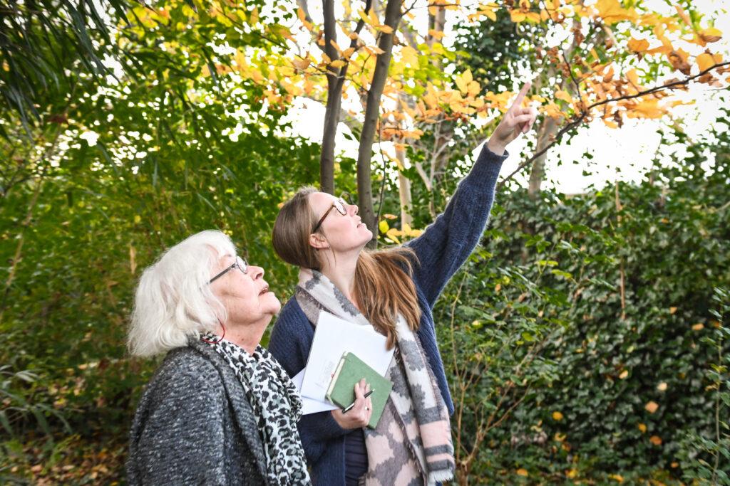 Zorg In De Tuin, herfst, boominspectie, tuinseizoen
