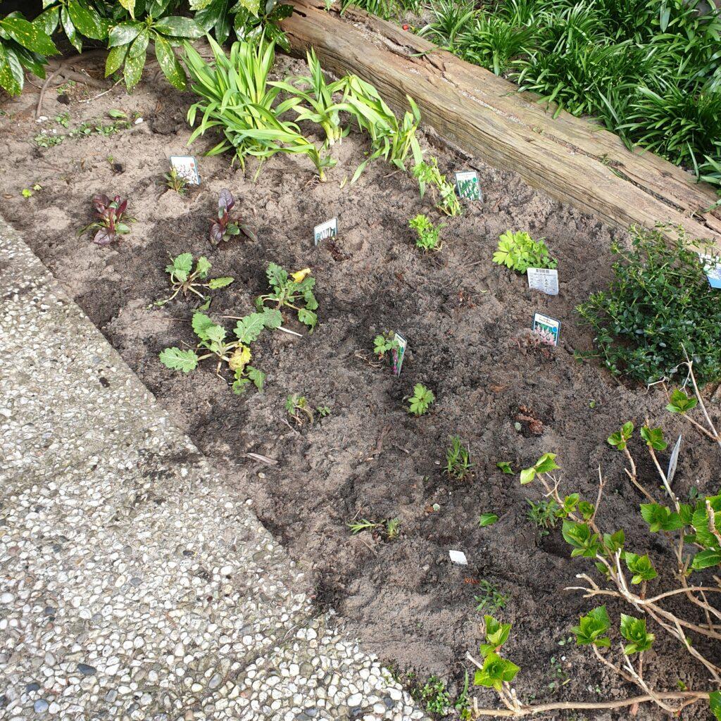 Border met planten op de plek waar eerst zes tegels lagen.